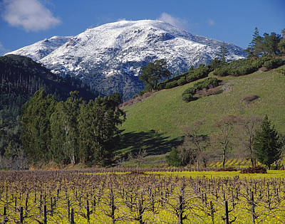 Photograph - 4b6384-snow Capped Mt. St. Helena  by Ed  Cooper Photography
