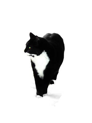 Photograph - Snow Cat Three by Expressionistart studio Priscilla Batzell
