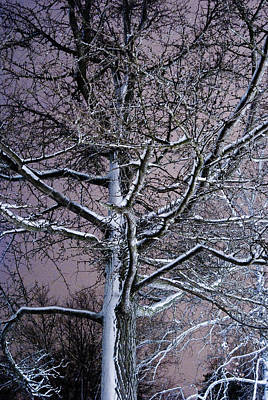 Photograph - Snow Coat by Joe Scott