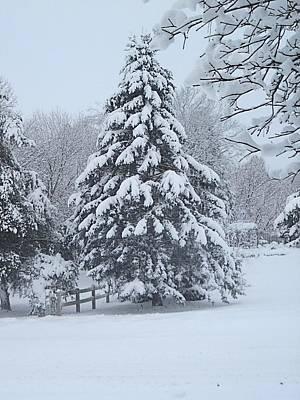 Digital Art - Snow Conifer 2-1-15 by Doug Morgan