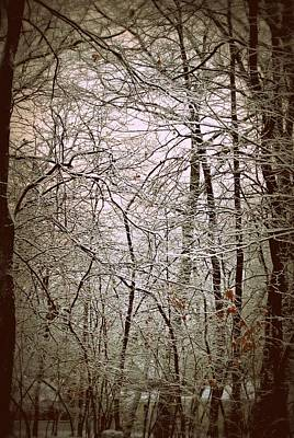 Snow Cover Forest Art Print by Dawdy Imagery