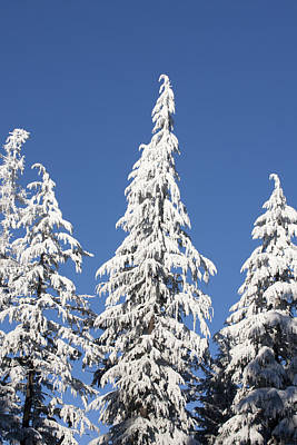 Photograph - Snow Covered - 0031 by S and S Photo