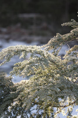 Photograph - Snow Covered - 0032 by S and S Photo
