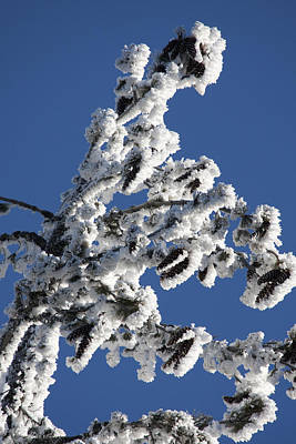 Photograph - Snow Covered - 0034 by S and S Photo