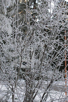 Photograph - Snow Covered - 0036 by S and S Photo