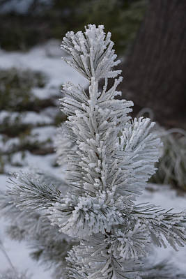 Photograph - Snow Covered - 0038 by S and S Photo