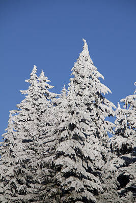 Photograph - Snow Covered - 0041 by S and S Photo