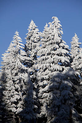 Photograph - Snow Covered - 0042 by S and S Photo