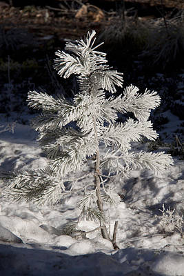 Photograph - Snow Covered - 0044 by S and S Photo