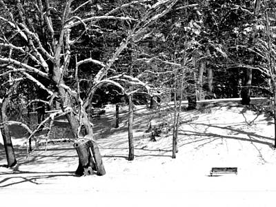 Photograph - Snow Covered Bench by CJ Rhilinger