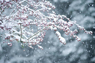 Snow Covered Branch During Snowing Art Print by Panoramic Images