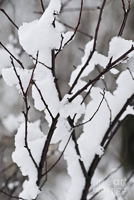 Snow Photograph - Snow Covered Branches by Elena Elisseeva