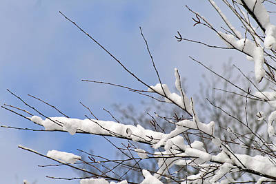 Photograph - Snow Covered Branches by Karen Adams