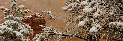 Ponderosa Pine Photograph - Snow Covered Branches Of Ponderosa Pine by Panoramic Images