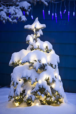 Snowy Night Photograph - Snow Covered Christmas Tree With White by Kevin Smith