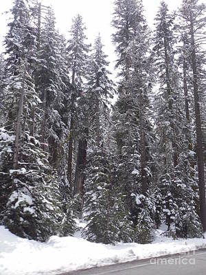 Photograph - Snow Covered Evergreens by Audrey Van Tassell