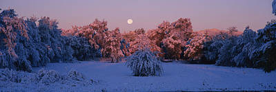 Snow Covered Forest At Dawn, Denver Print by Panoramic Images