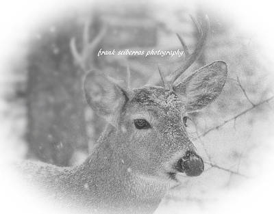 Photograph - Snow Covered by Frank Sciberras