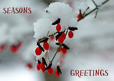 Photograph - Snow Covered Fruit Seasons Greetings by Debbie Oppermann