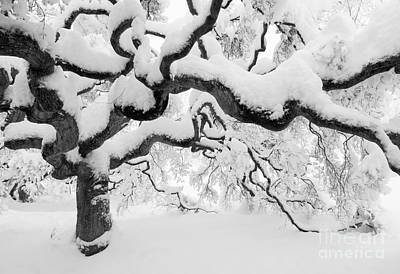 Winter Photograph - Snow Covered Japanese Maple Tree by Oscar Gutierrez