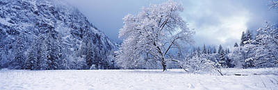 Cold Temperature Photograph - Snow Covered Oak Tree In A Valley by Panoramic Images