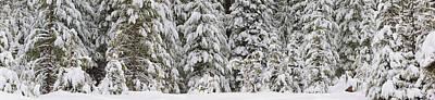 Snow Covered Pine Trees, Deschutes Art Print