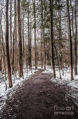 Art Print featuring the photograph Snow Covered Trail by Debbie Green