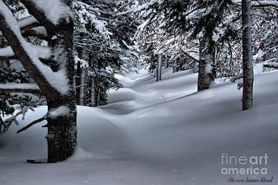 Art Print featuring the photograph Snow Covered Trail by Steven Reed