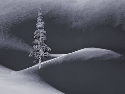 Snow Covered Tree And Mountains Bw Art Print