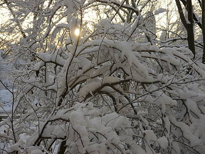 Snow Covered Tree And Sun Art Print