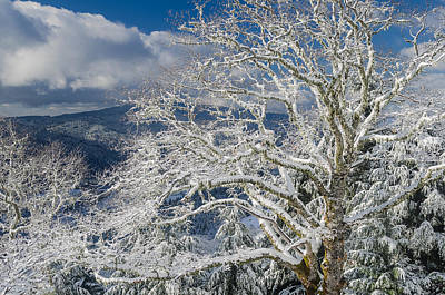 Photograph - Snow Covered Tree And Winter Scene by Greg Nyquist