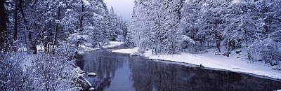 Cold Temperature Photograph - Snow Covered Trees Along A River by Panoramic Images
