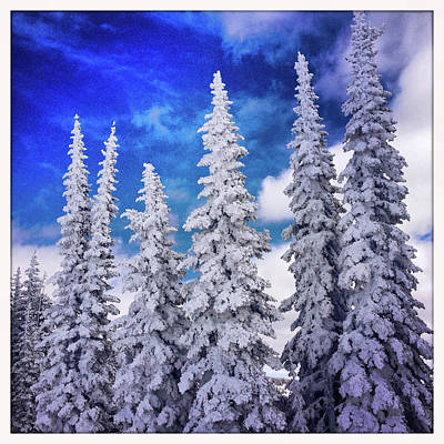 Photograph - Snow Covered Trees And Blue Sky by Karen Desjardin