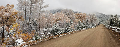 Snow Covered Trees At Roadside, El Art Print by Panoramic Images