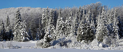 Quebec Photograph - Snow Covered Trees, Brome Lake, Quebec by Panoramic Images