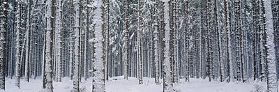 Snow Covered Trees In A Forest, Austria Art Print