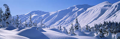 Snow Covered Trees On A Hill, Chugach Art Print by Panoramic Images