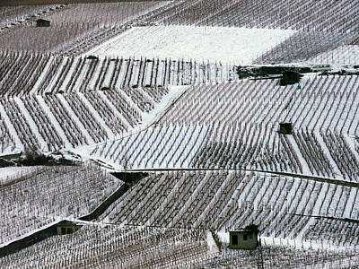 Photograph - Snow-covered Vineyards In Switzerland by Adam Sylvester