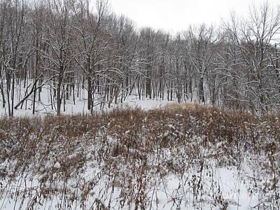 Snow Covered Woodland Art Print