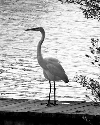Photograph - Snow Crane by Kim Bemis