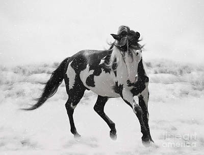 Painting - Snow Dancer by Lynn Jackson