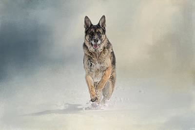 Dog In The Snow Photograph - Snow Day For The Shepherd by Jai Johnson