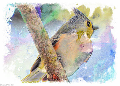 Tufted Titmouse Photograph - Snow Day Tufted Titmouse - Digital Paint II by Debbie Portwood