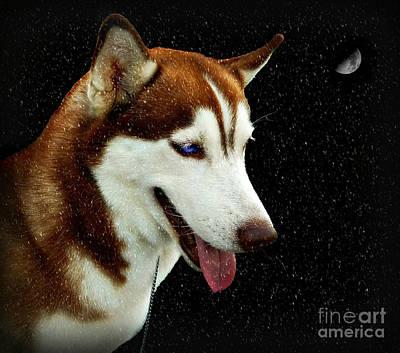 Digital Art - Snow Dog by Ian Gledhill
