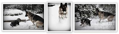 Art Print featuring the photograph Snow Dogs. Triptich by Tanya  Searcy