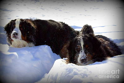 Dog In Landscape Photograph - Snow Eaters by Patti Whitten