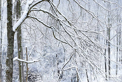 Audrey Hepburn - Snow Elk River by Thomas R Fletcher