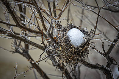 Snow Filled Nest Art Print