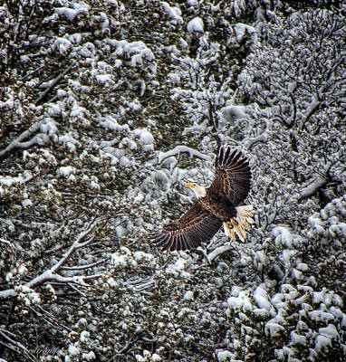 Photograph - Snow Flight Bald by Britt Runyon