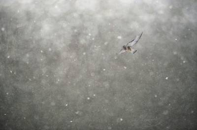 Photograph - Snow Float by Emily Stauring